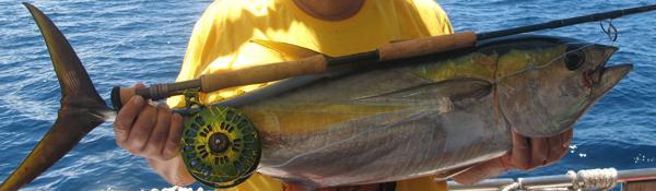Thon jaune capturé aux Seychelles - Moulinet Abel Super 12W - Custom Artistic