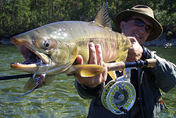 Dog Salmon pêché sur la Yama, en Sibérie   Canne Thomas & Thomas Solar 9p soie 8  Moulinet Abel Super 7/8N, couleur Platine