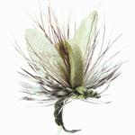 emergente d'éphémère 15 - Light Olive