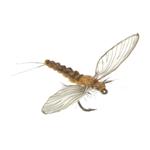 Ephémère morte 53 - Cinnamon Brown