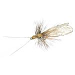 Trichoptère Adulte  82 - Cinnamon Brown