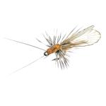 Trichoptère Adulte  84 - Cinnamon Brown