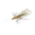 Trichoptère adulte 87 - Cinnamon Brown & Apple Green