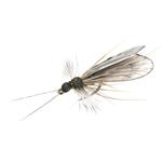 Trichoptère adulte 88 - Black