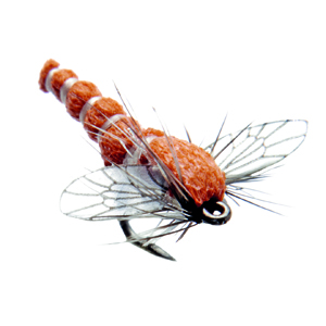 Mouche J:son chironome adulte - 129 - 7 mm h24 - Red