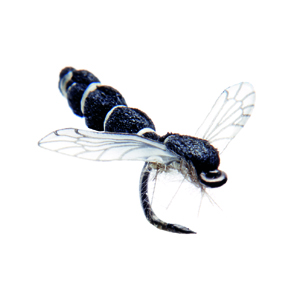 Mouche J:son chironome adulte - 130 - 7 mm h24 - Black