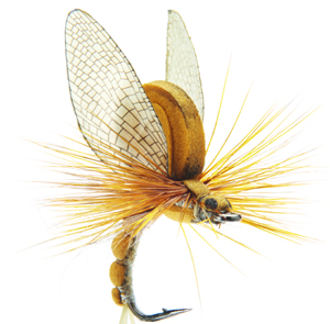 Mouche J:son émergente d'éphémère - 16 - 20 mm h12 - Olive Brown