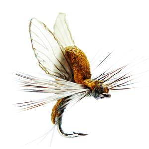 Mouche J:son émergente d'éphémère - 22 - 7 mm h24 - Olive Brown