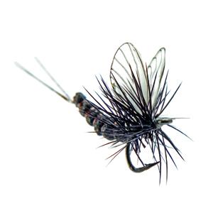 Mouche J:son éphémère adulte - 42 - 7 mm h24 - Black