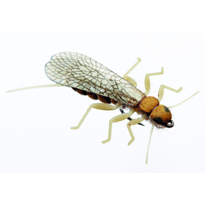 Mouche J:son perle adulte - 118 - 22 mm h16 -Olive Brown
