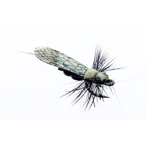 Mouche J:son perle adulte - 124 - 12 mm h20 - Black