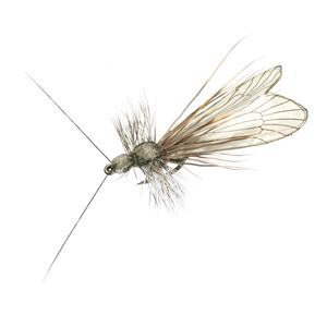 Mouche J:son trichoptère adulte - 81 - 25 mm h10 - Ash Grey