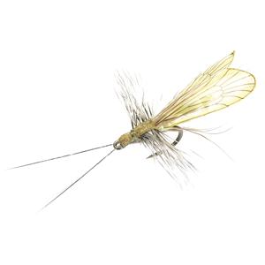 Mouche J:son trichoptère adulte - 86 - 17 mm h16 - Saffron Gold & Pistachio Green