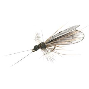 Mouche J:son trichoptère adulte - 88 - 17 mm h16 - Black
