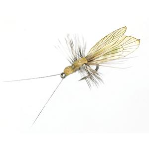Mouche J:son trichoptère adulte - 91 - 13 mm h20 - Saffron Gold & Pistachio Green