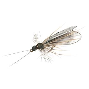 Mouche J:son trichoptère adulte - 93 - 13 mm h20 - Black