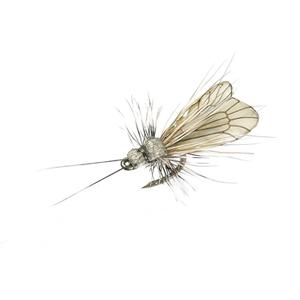 Mouche J:son trichoptère adulte - 95 - 9 mm h22 - Ash Grey