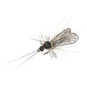 Mouche J:son trichoptère adulte - 96 - 9 mm h22 - Black