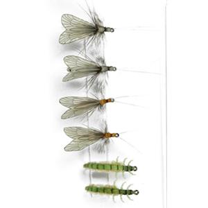 Mouches  J:son Pack Grands trichoptères