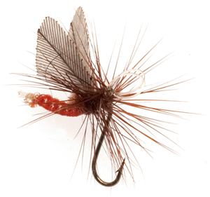 Mouche Terenzio 26 - Orange  h16