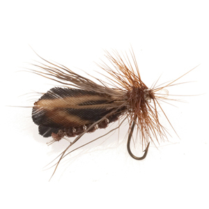 Mouche Terenzio 28 - Ryacophila Dorsalis  h16